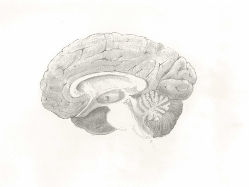 Brain Cut Sketch LMOORE