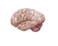 Brain Sketch LMOORE