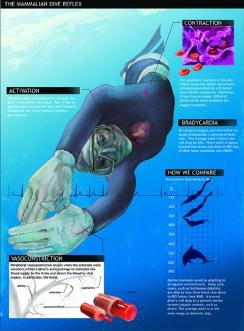 Dive Reflex Infographic LMOORE